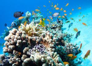 Отели Хургады с коралловыми рифами
