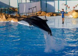 Дельфинарий в Хургаде Dolphin World