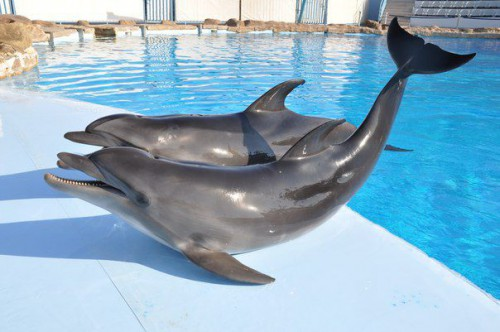 Дельфины в бассейне в дельфинарии Dolphin World в Хургаде