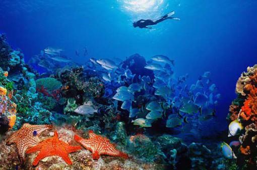 Подводный мир Хургады