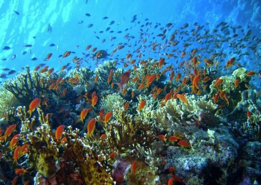 Карлес риф в Хургаде