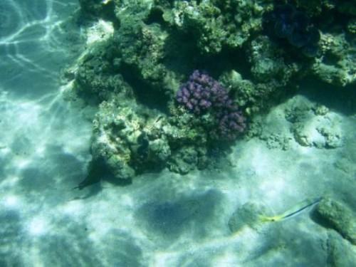 Подводный мир пляжа Терразин