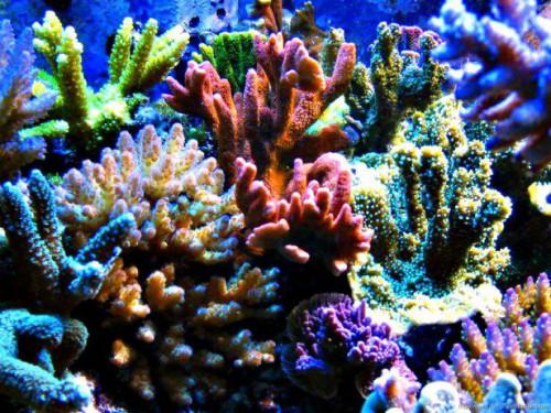 Коралловые рифы в заповеднике Рас-Мохаммед