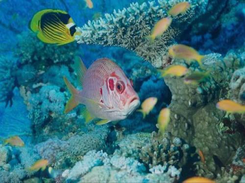 Подводный мир заповедника Рас-Мохаммед