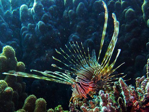 Коралловые рифы в Эйлате