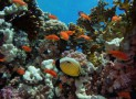 Дайвинг в Хургаде – все подводные красоты Красного моря