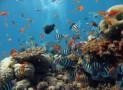 Дайвинг в Шарм-эль-Шейхе – невероятные красоты Красного моря