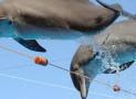 Дельфинарий «Dolphinella» в Шарм-эль-Шейхе