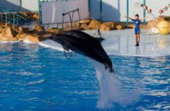 Дельфинарий в Хургаде Dolphin World – дельфины Сабрина и Герасим