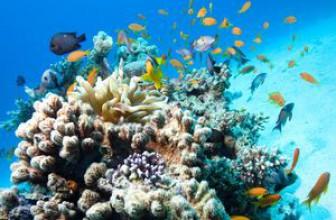 Отели Хургады с коралловыми рифами – завораживающий отдых